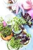 在复活节彩蛋壳,节食的概念的生长健康新芽 库存图片