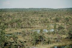 在夏天使与杉树和湖的看法陷入沼泽 Kemeru拉脱维亚 库存图片