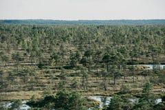 在夏天使与杉树的看法陷入沼泽和湖和森林背景的 Kemeru拉脱维亚 免版税库存图片
