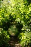 在夏天公园的模糊的走道有绿色叶子的 免版税库存图片