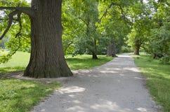 在夏天公园胡同的道路 免版税库存图片