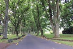 在夏天公园遮蔽的宽被铺的走道 图库摄影