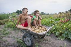 在夏天在村庄,孩子在庭院运载potat 免版税图库摄影
