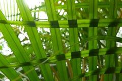 在夏天太阳的绿色叶子 库存图片
