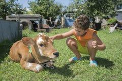 在夏天庭院抚摸小牛的一个小男孩 免版税库存照片