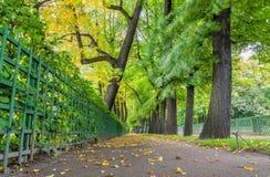 在夏天庭院里降低秋天树看法在圣彼德堡 库存照片