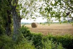 在夏天收集的,动物的干草 库存图片