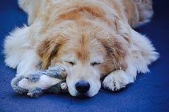 在夏天放松的睡觉 免版税库存照片