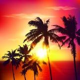 在夏天日落的棕榈剪影 库存照片