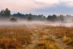 在夏天早晨河岸的有雾的土路 在summe的有薄雾的黎明 免版税图库摄影