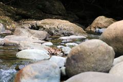 在夏天期间,一点瀑布在密林的河在哥斯达黎加 免版税库存图片