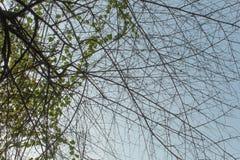 在夏天期间,树枝 免版税库存照片