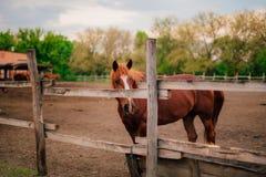 在夏天期间,两匹马在一个小牧场 免版税库存图片
