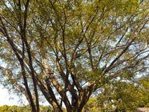在夏天期间,树 库存照片