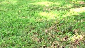 在夏天构造绿草草甸有顶视图,领域自然草坪走的运动的行动backgroun 股票视频