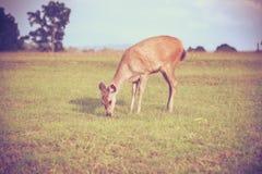 在夏天森林动物的鹿在自然环境里 装饰图案 免版税库存图片