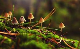 在夏天森林里采蘑菇用其他蘑菇 图库摄影