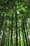 在夏天森林里 免版税库存图片