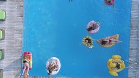 在夏天水池的休息,在游泳池边的小组女朋友到在可膨胀的圆环的泳装游泳里和床垫昂贵的 股票录像