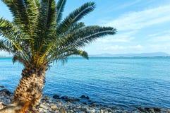在夏天海滩(希腊)的棕榈树 免版税库存照片