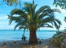 在夏天海滩(希腊)的棕榈树 库存图片