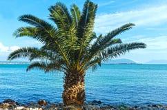 在夏天海滩(希腊)的棕榈树 免版税图库摄影