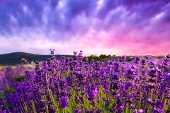 在夏天淡紫色领域的日落 免版税库存图片