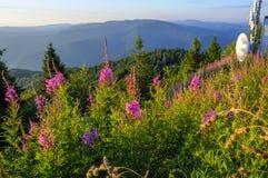 在夏天的美丽的山的休息 免版税库存图片