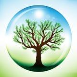 在夏天结构树里面的玻璃地球 图库摄影