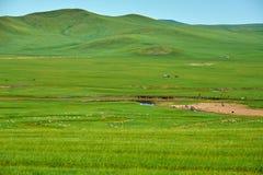 在夏天草原的白羊 免版税库存照片