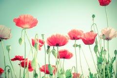 在夏天草甸的狂放的鸦片花 背景细部图花卉向量 免版税库存图片