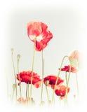 在夏天草甸的狂放的鸦片花 背景细部图花卉向量 免版税图库摄影