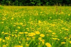 在夏天草甸的花 库存图片