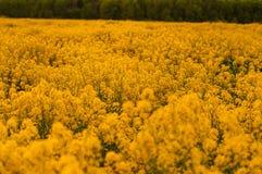 在夏天草甸的花 图库摄影