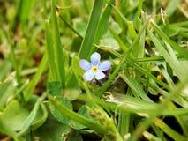 在夏天草甸的蓝色植物花 库存图片