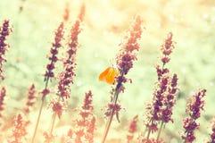 在夏天草甸的蝴蝶 免版税库存照片