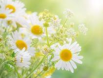 在夏天草甸的野花 库存照片