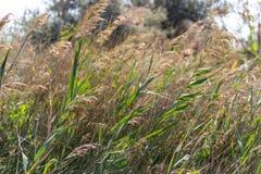 在夏天被归档的风下的绿色和黄色草 温暖的风在草甸 农业和夏天自然概念 库存照片