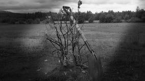 在夏天铲起基于最近被种植的红醋栗灌木 免版税库存照片
