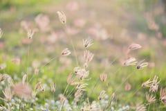 在夏天领域特写镜头的Camomiles 库存照片