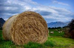 在夏天领域的干草堆 免版税库存照片