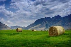 在夏天领域的干草堆 库存照片