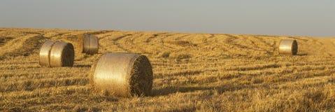 在夏天领域的干草 免版税图库摄影