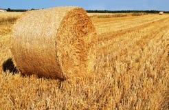 在夏天领域的干草 免版税库存图片