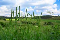 在夏天领域的野草 免版税图库摄影