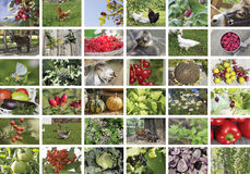 在夏天题材的拼贴画,种田,生态 免版税库存图片