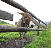 驴在夏天鸟舍 免版税库存照片