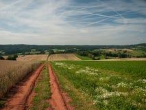 在夏天,捷克期间,一个草甸和一个领域之间的一条道路 免版税库存图片