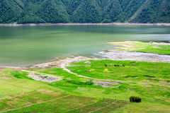 在夏天,牛和绵羊在湖旁边的草哺养 库存照片