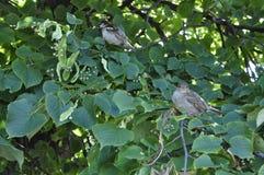 在夏天绽放绿色树射击前 鸟舍 免版税库存图片